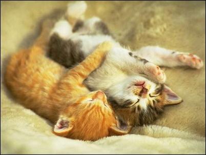 Kitten 1 S Jpg