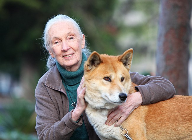 jane goodall with dingo 1b