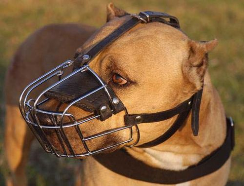 Wire Basket Pit Bull Muzzle4