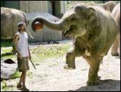 Cirkus 1m