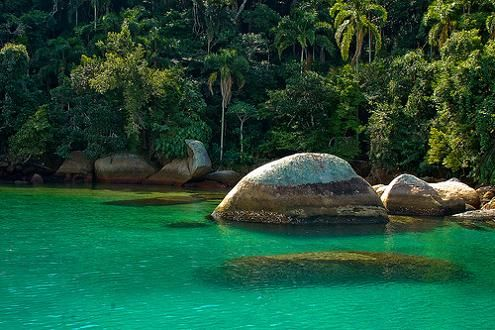 Brazilianrainforest Sr