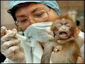 Animal Testing M