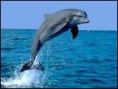 Delfin M
