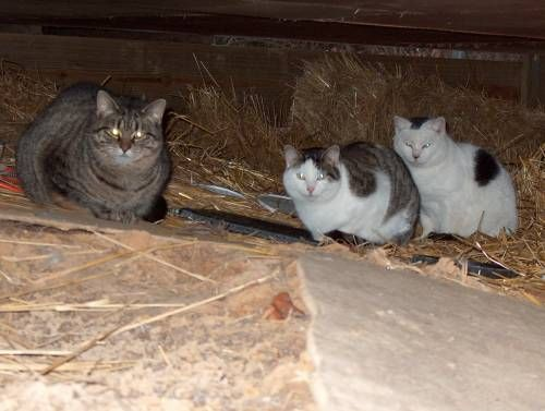 Feral Cats 1