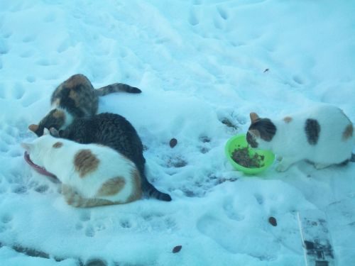 Feral Cats 2